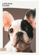 Quaderno maxi A4 Colour Code Animals Snapshot. Quadretti piccoli 4 mm