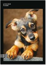Quaderno Maxi A4 Color Code Animals Snapshot 100 gr Quadretti piccoli 4 mm