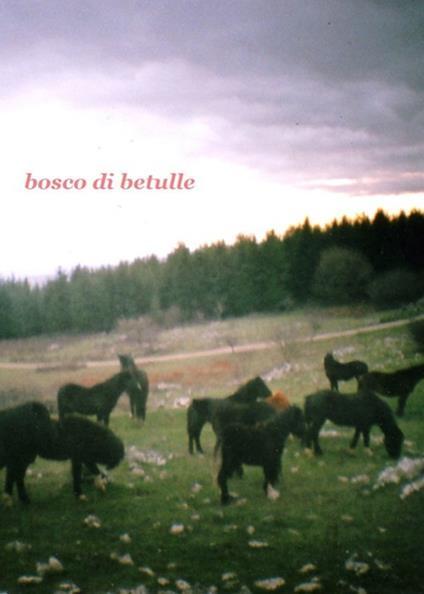 Bosco di betulle. Ediz. italiana e inglese - Francesca Lanzarini,Viola Niccolai,Silvia Rocchi - copertina
